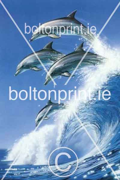 Dolphins 2